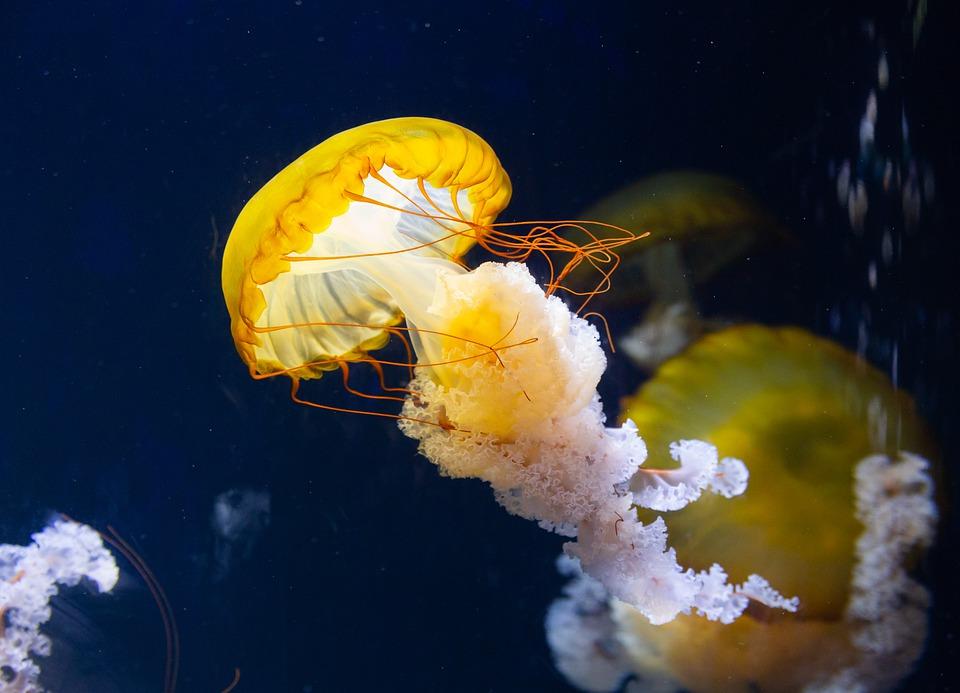Magical creatures at SEA Aquarium Sentosa