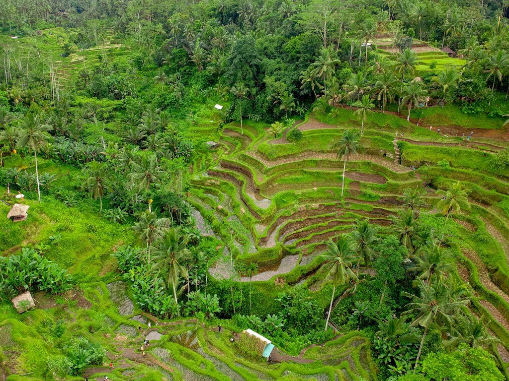Pristine green lands at Tegalllalang