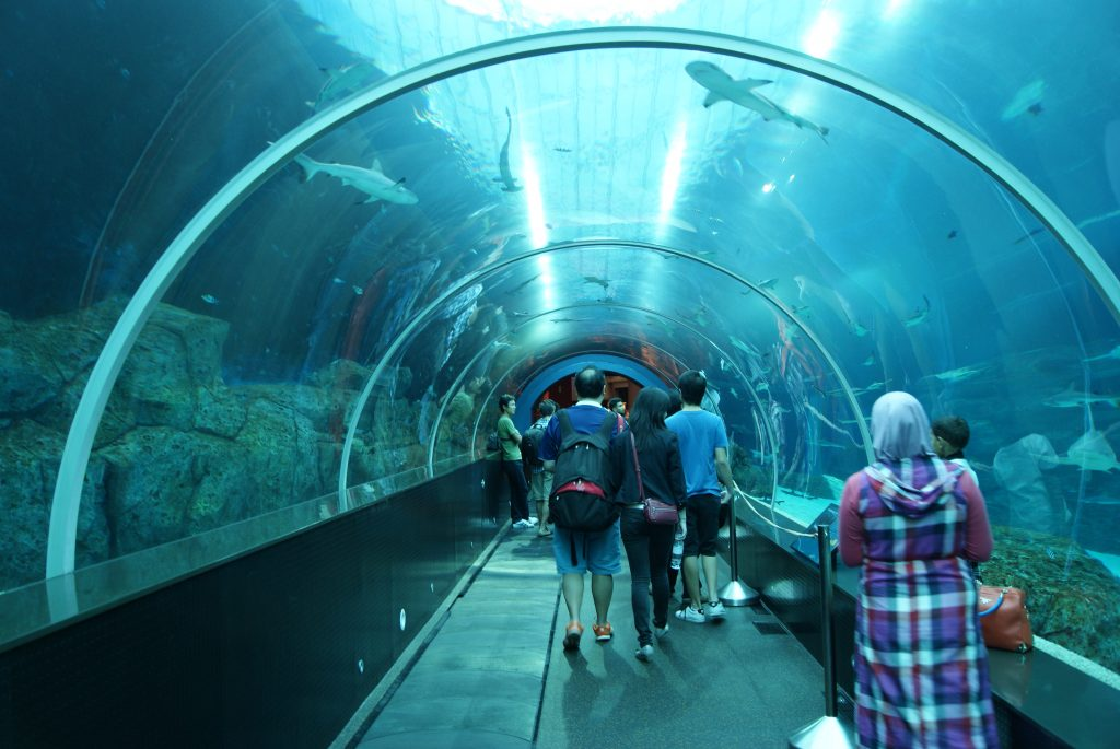 People visiting the S.E.A aquarium in marine life park
