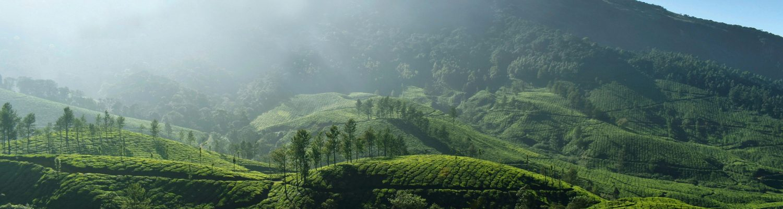 Kerala Hill Views