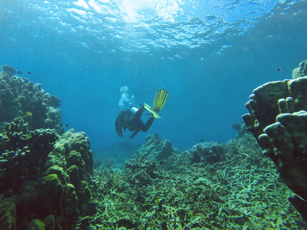 Snorkeling at Tioman Island