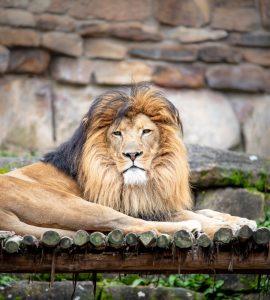 wildlife at sikkim