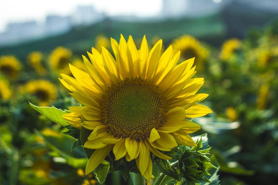 flower in melbourne garden