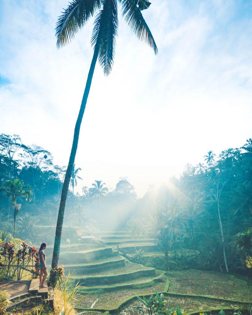 Sunrise view at Tegallalang, Bali