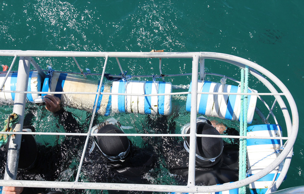shark cage diving, capetown