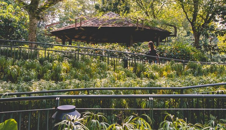 bridge at the singapore botanic gardens
