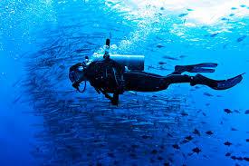 Snorkeling at  Sipadan Island