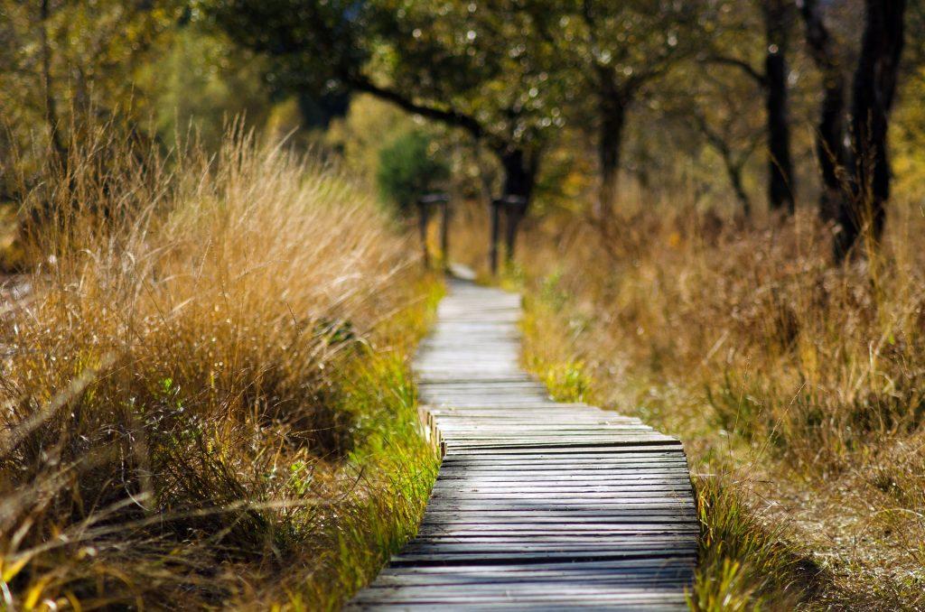Wooden walking trail (Things to do in Moratuwa)