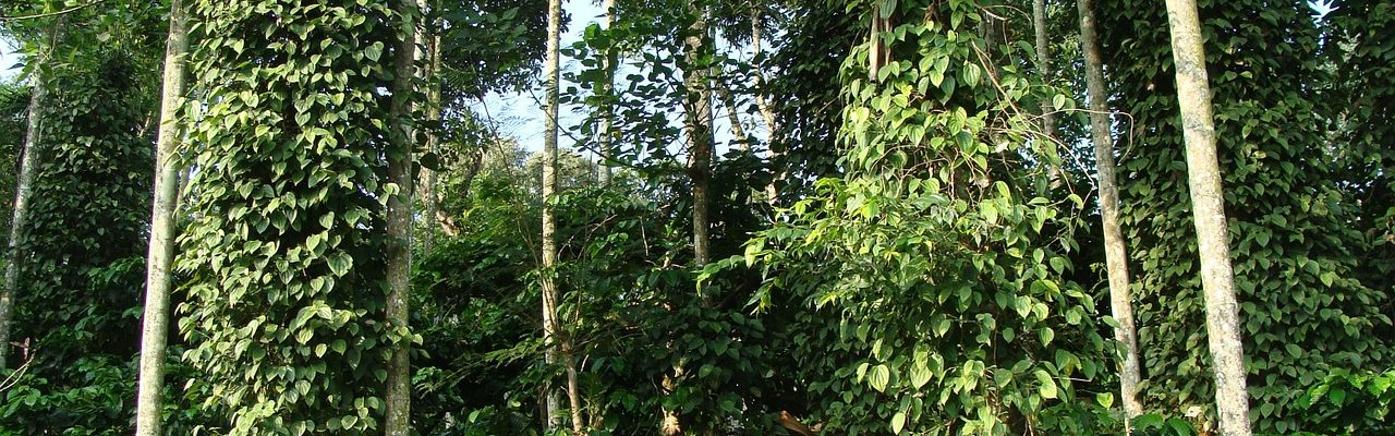 Best day trips in Coorg