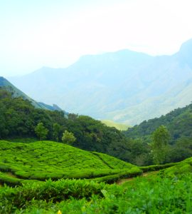 Family resorts in Munnar