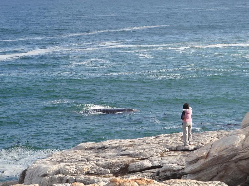 Whale-watching in Hermanus