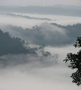 Danum Valley in Borneo