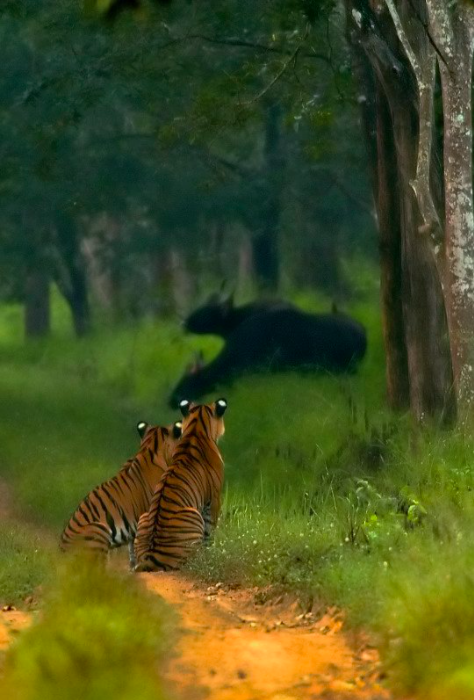Bhadra Wildlife Sanctuary