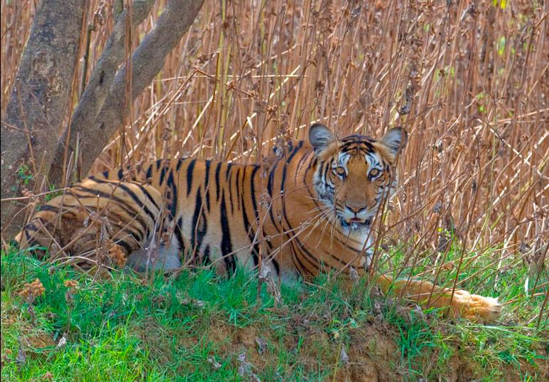 Safari Species