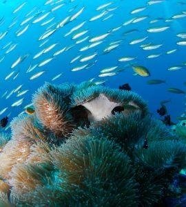 Scuba diving view