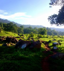 Landscape picture of yelagiri hillstation
