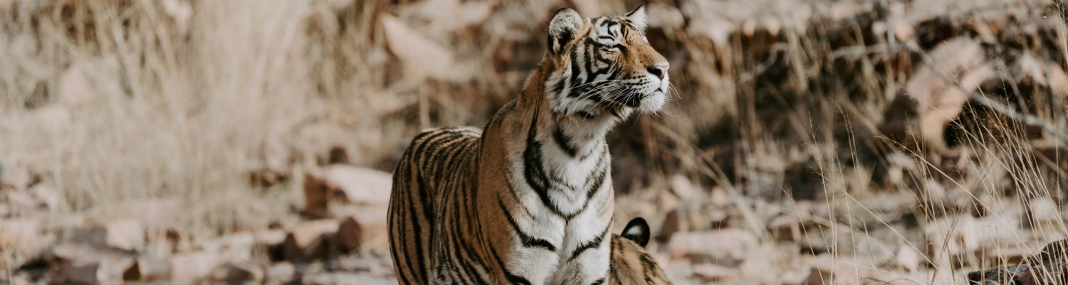 Top things to do in Ranthambore