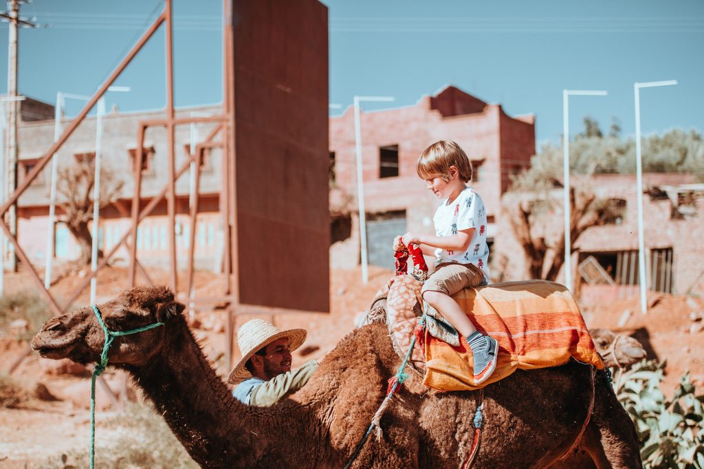 Bactrian Camel Safari