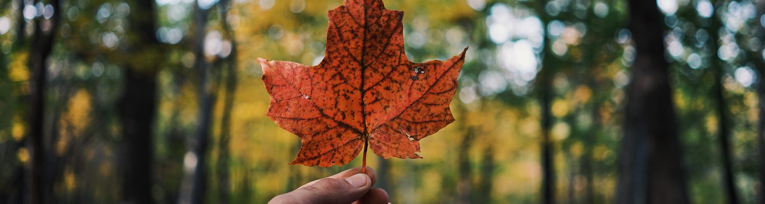 An amazing picture of a person holding a leaf in Westmount in Canada