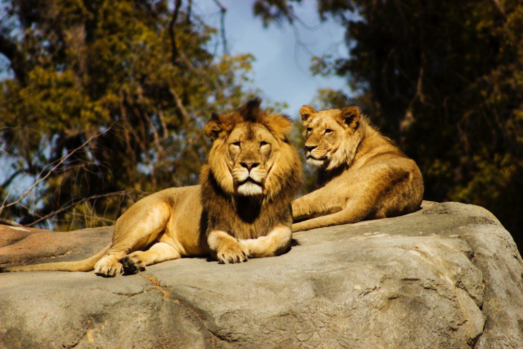 The Perth Zoo