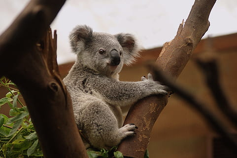 Spotting Koala Bears in the Billabong Sanctuary