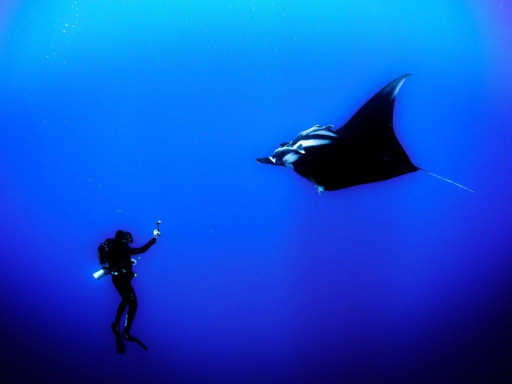 Scuba diving at Komodo National park.