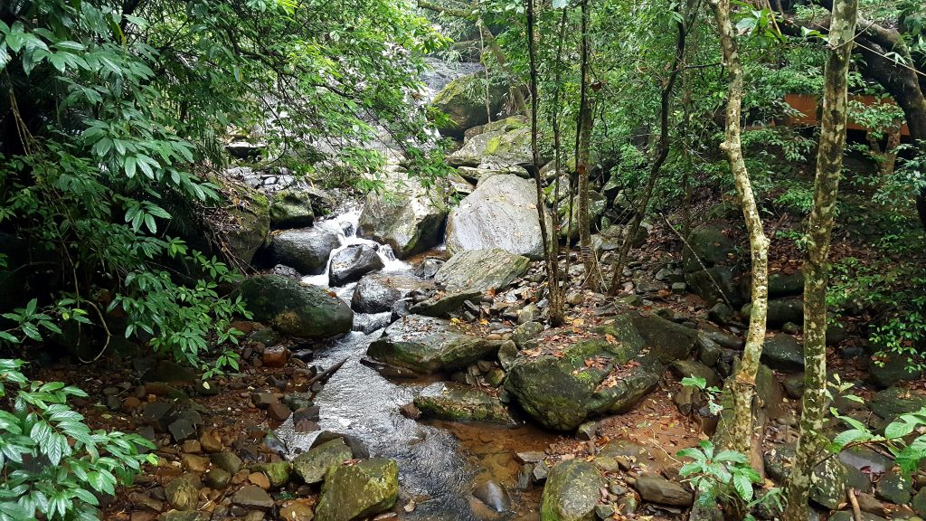 A picture of a waterfall in Wayanad