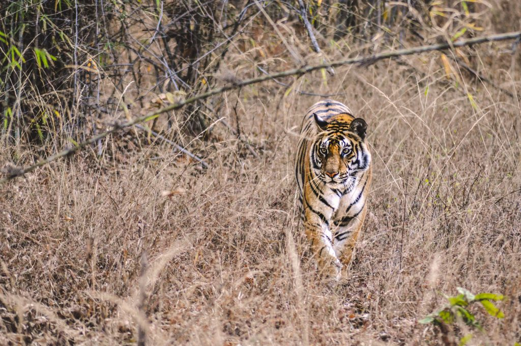 Wildlife experience in India