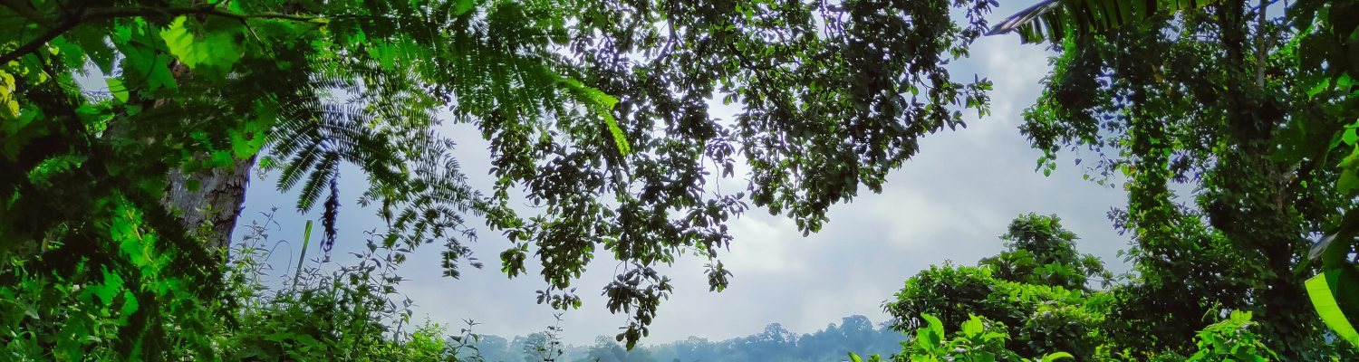 A picture of the green trees that was taken at Tripura