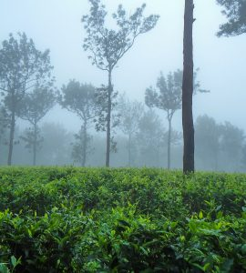 A beautiful click of Munnar