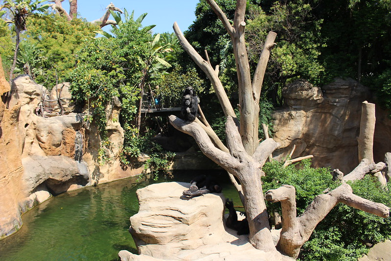 Bioparc Fuengirola at Costa del Sol