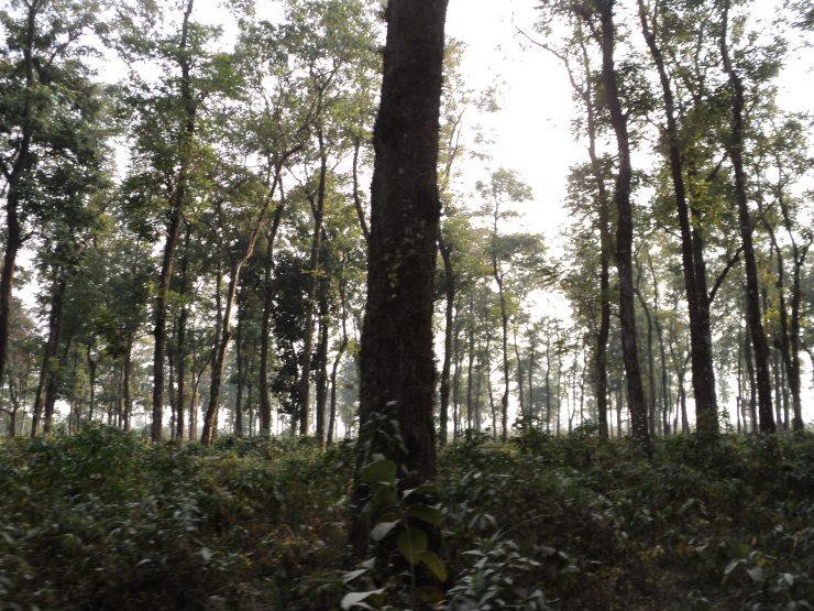 Jaldapara_National_park