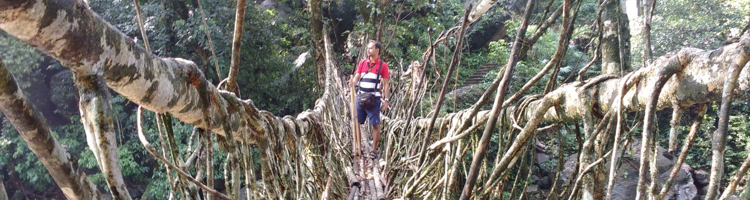longest living root bridge in Cherrapunjee