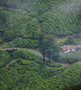 A picture of natural beauty that was taken in Kerala