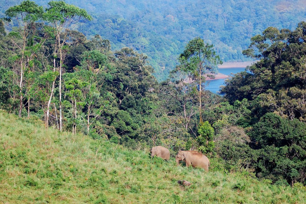 2 elephants in forest