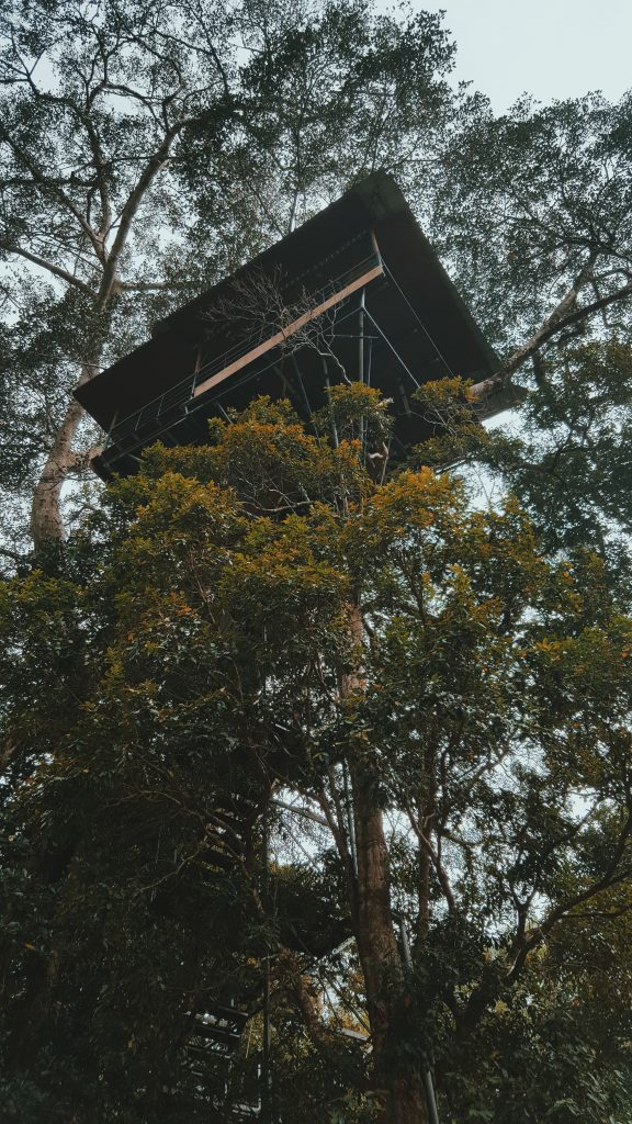 A picture of a treehouse that was taken in Wayanad in Kerala