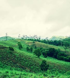 Valley in Thekkady