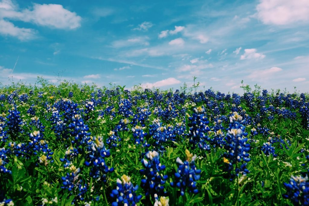 flower garden in Texas