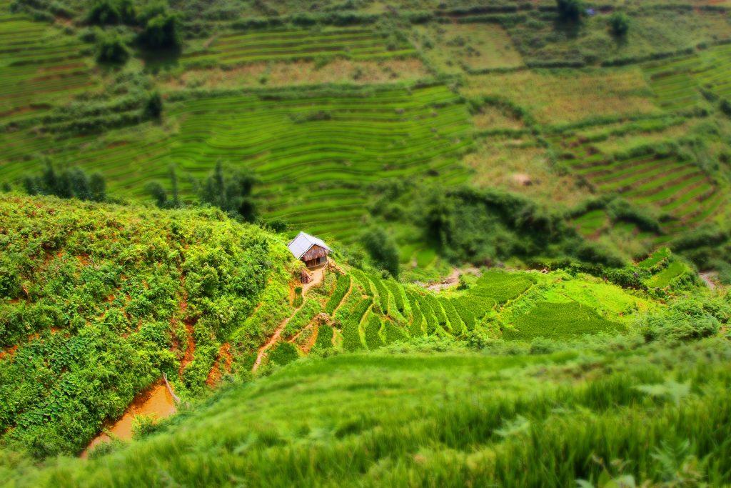 Vietnam Sapa Rice Field