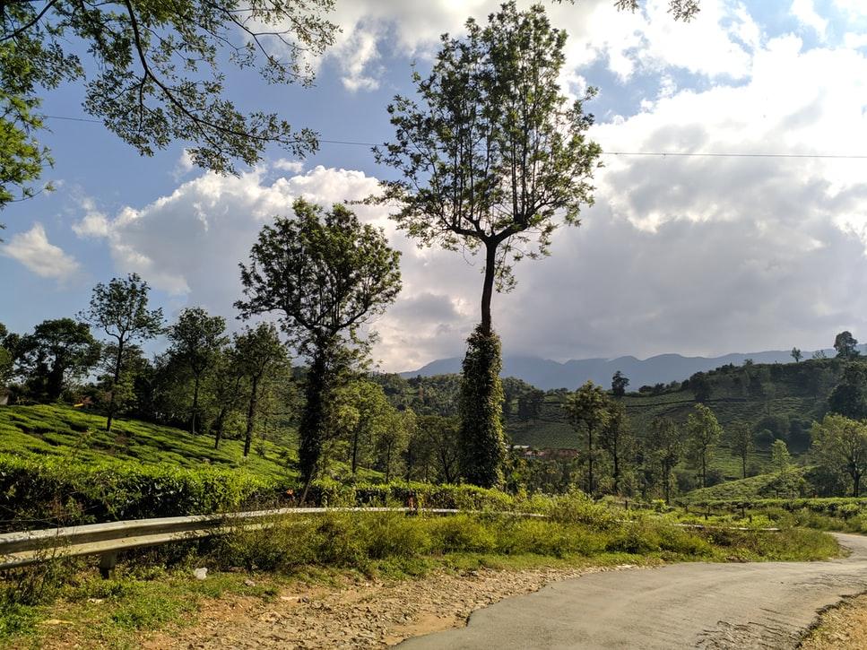 a road in wayanad