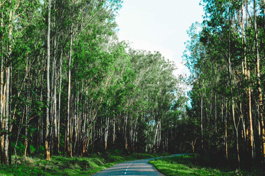 Thirunelli route in Wayanad