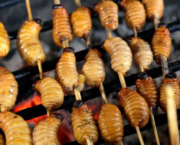 bizarre foods in the world