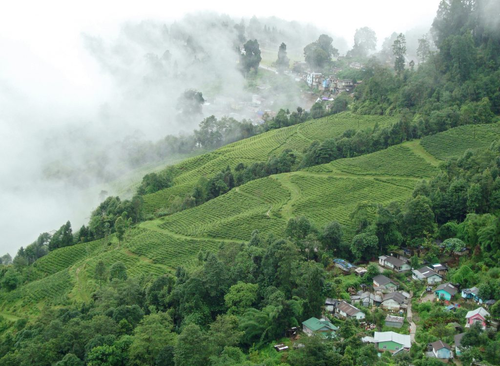 Darjeeling Mountain