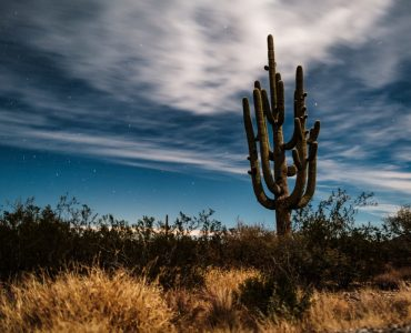 nature walk-one of the top things to do in Tucson