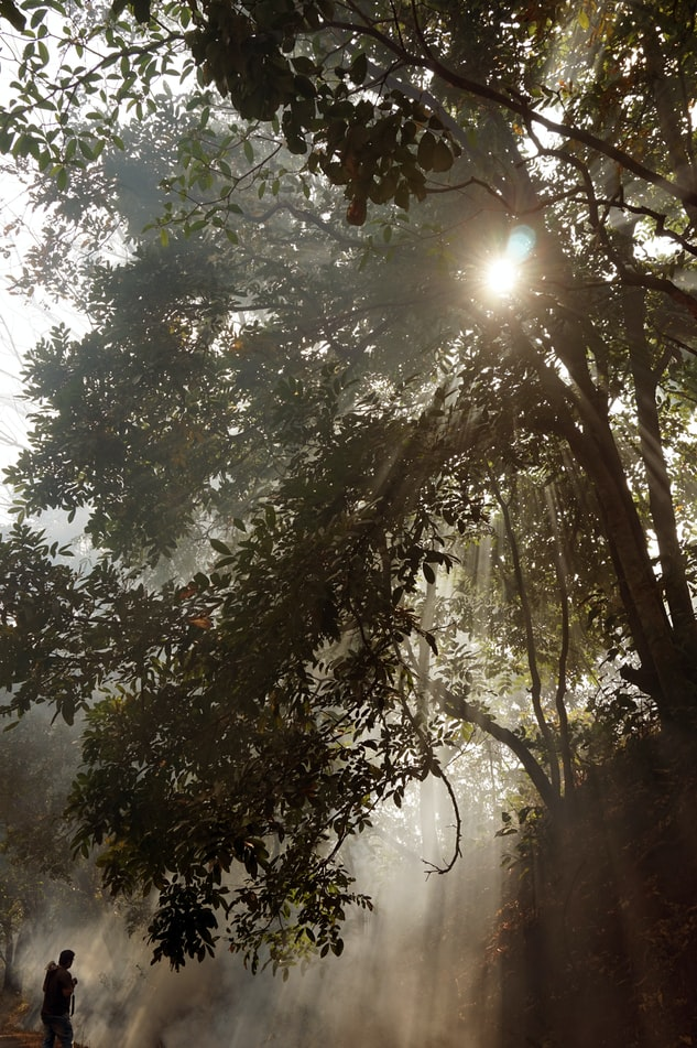 foggy tourist places in Dandeli