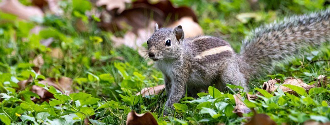Squirrel in Kudemukh National Park
