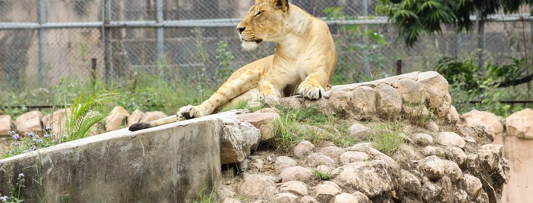 Kerala Zoo