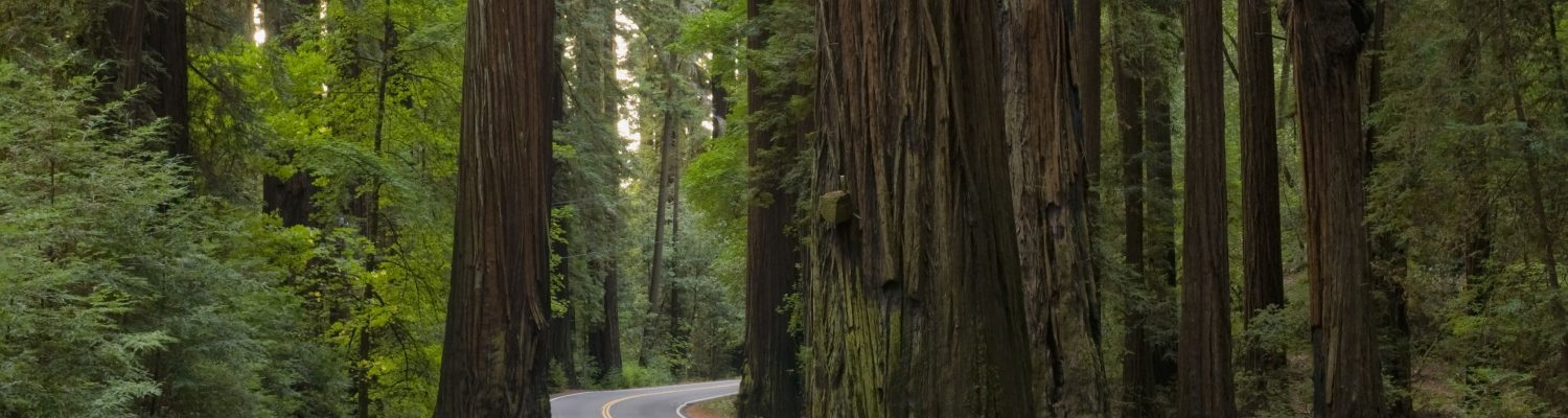 Redwood Highway (California 101)