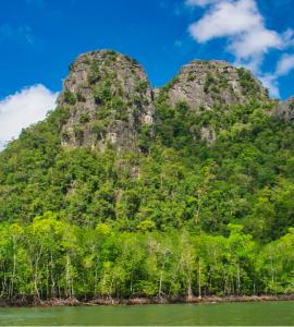 Mangrove, Langkawi