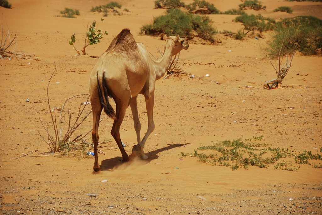 Desert in Ras al-Khaimah